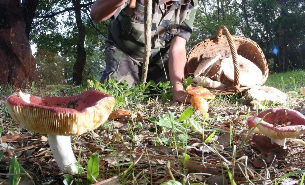 champignons-nice-matin