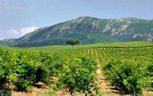 peninsule-de-setubal-route-des-vins